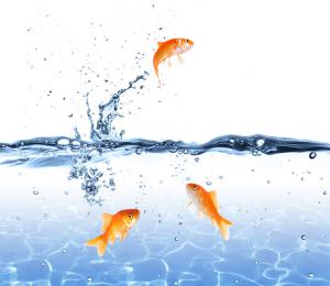 Like fish are immersed in water, we are immersed in our habits.