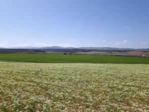 Site of Hive Energy's El Salobrai Solar Park