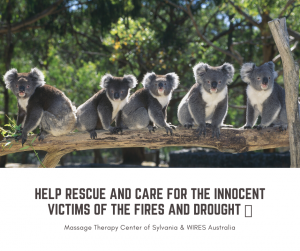 Massage Therapy Center of Sylvania donates to WIRES to help Australia's Animals