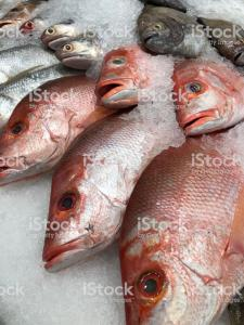 Frozen Fish and Seafood