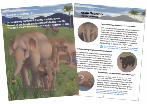A fan of two pages: on the left is a first page from the book's elephant section, showing an elephant mother and calf walking towards the viewer; on the left is a page from the back explaining environmental details of the first's illustrations, including a sloth bear.