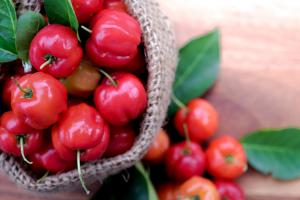 "The acerola berry contains approximately 100 times more vitamin C than found in an orange, on an equal-weighted basis, giving acerola its ""superfood"" status."