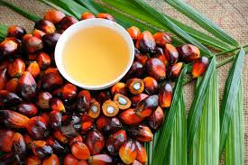 Sustainable Palm Oil Market Size