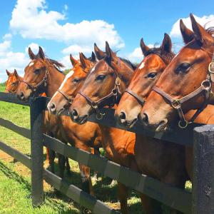 Yearlings at Stone Farm in Paris, Kentucky | Photo Credit: Marty Irby