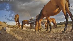 Photo of wild horses at WPM feeding hub. Last visit was April and May based on RFID reports.
