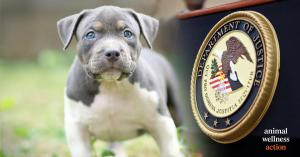 Senate Animal Cruelty Enforcement Act | Photo Credit: Craig Swanson Design