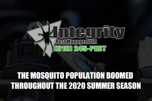 The Mosquito Population Boomed Throughout the 2020 Summer Season