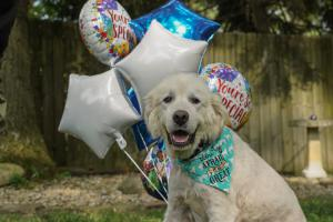 Once neglected, Molly, age 8, celebrates having found a forever home. Before adoption, she received veterinary care through a Grey Muzzle grant to Stop the Suffering Animal Rescue in Ohio.