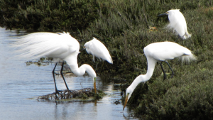 The War on Wildlife is being waged against the animals in LA's Ballona Wetlands!
