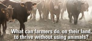 Cows are raised to be slaughtered. A growing number of ranchers do not want to see them killed.