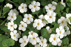 Bacopa monnieri, known as the plant of universal consciousness, is used to support the treatment of cognitive deficits and improve learning.