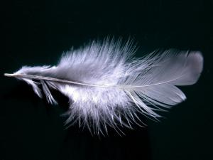white feather alone on black