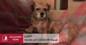 Terrier speaking English avatar with the words beneath Lucy victim of covid-19 fraud