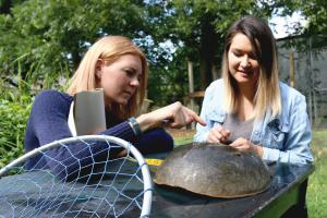 Dr. Kristen Dellinger, principal investigator, and research intern, Jordan Gannon, conducting a preliminary assessment of a mature female horseshoe crab.