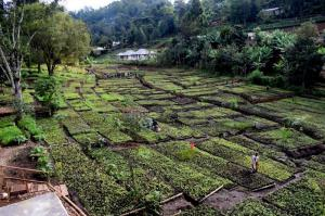 Large tree nursery in Tanzania with thousends of seedlings