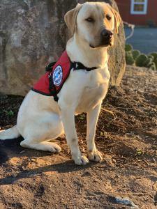 Diabetic Alert Dog from SDWR