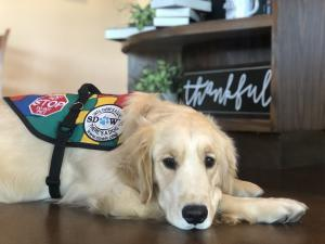 Autism Service Dog from SDWR