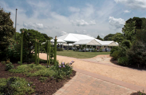 NCSU's JC Raulston Arboretum Garden Party and Rare Plant Auction