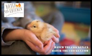 Cute & fluffy baby chicks that can be experienced through Hatch The Chicken / Give The Chicken