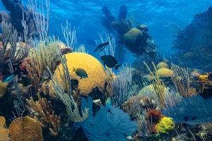 Coral, fish and other creatures make up Bermuda's beautiful reefs. They and the economy benefit with the informed creation of Marine Protected Areas.
