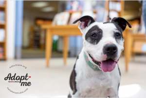 New photos and creative marketing helped senior dog Bee find a new home.
