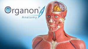 3D Organon Anatomy Partner with Munfaird for Middle East