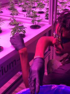 Carlton Williams of New Life CA checks on plants growing in the AEssenseGrows AEtrium system.