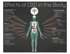 Effects of CBD in the Body
