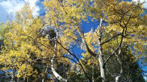 Leaf-peeping opportunities abound in Colorado's high country