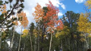 Aspens are at their peak in September and early October in Colorado