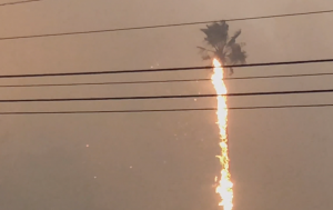 Malibu palm tree in flames