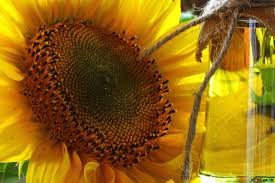 Organic Sunflower Oil Market - 2019-2025